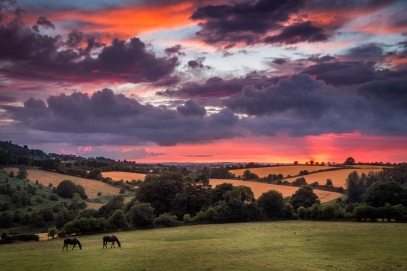 Horses in the Sunset