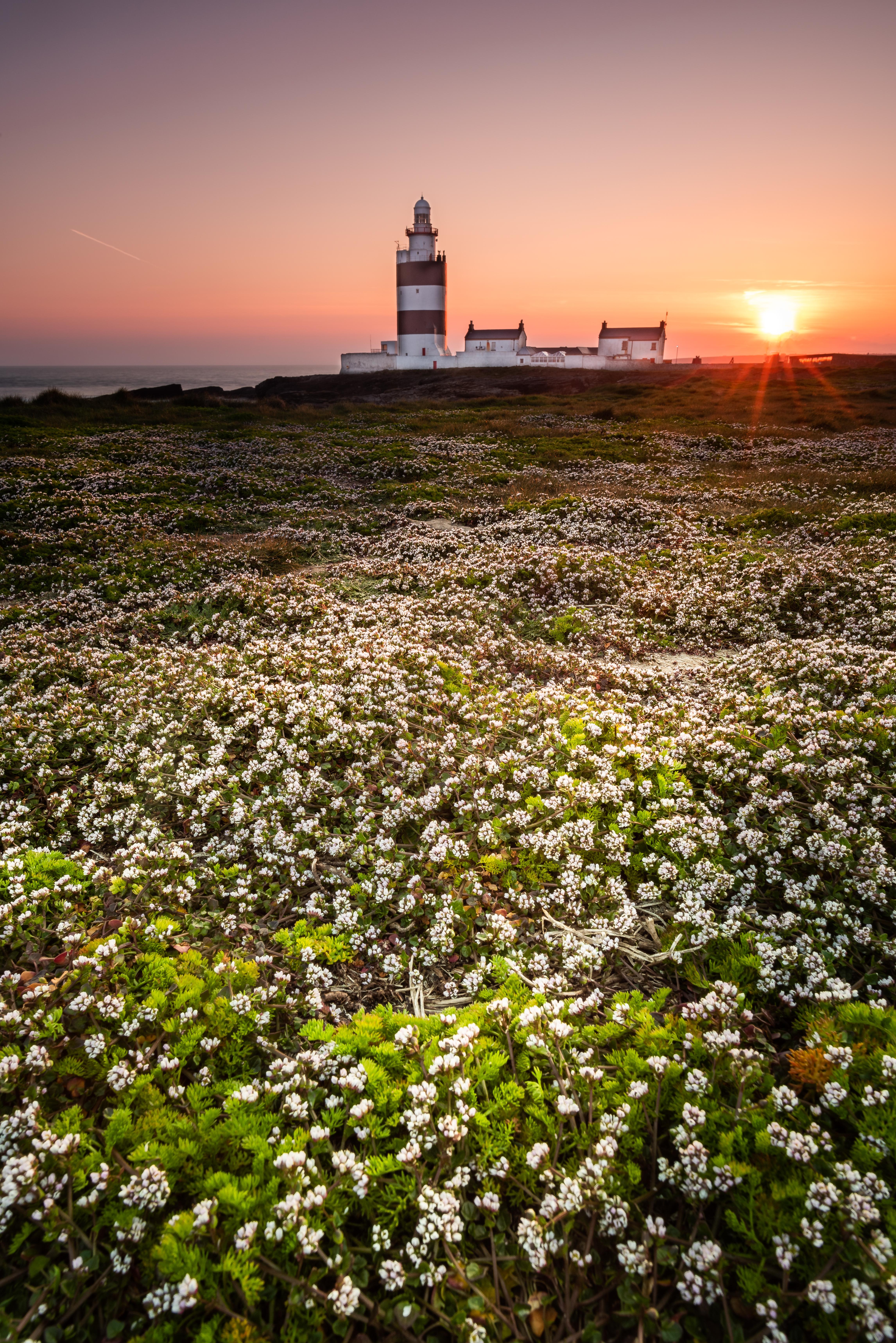 Hook Head, Ireland, Sunset, Flowers, Wexford